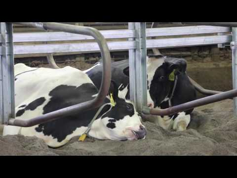 Animal Agriculture Against Climate Change