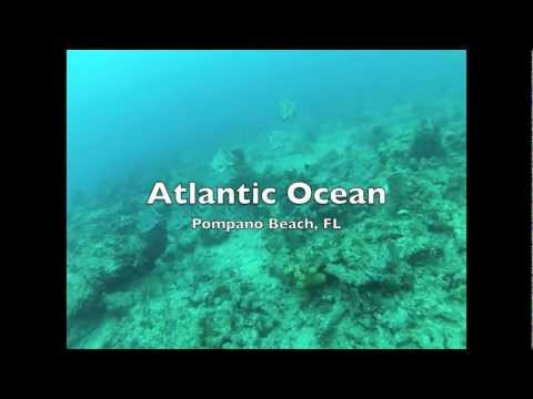 Diving in Florida: Atlantic vs Gulf of Mexico - Which is better?