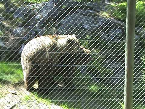animal parring