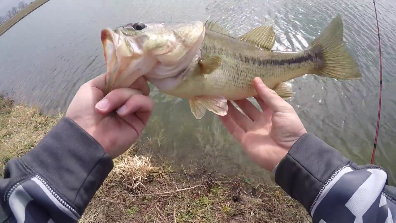Fishing with the best bait ohio pond fishing youtube for Best bait for pond fishing