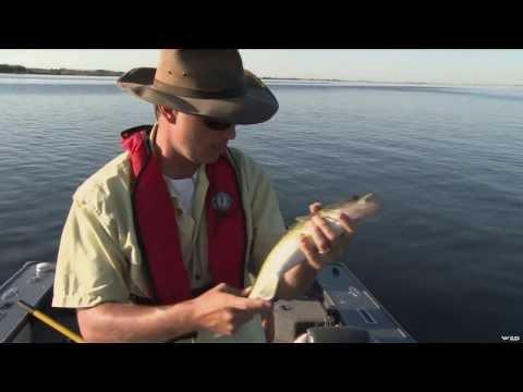 Walleye Fishing On Blackstrap Lake