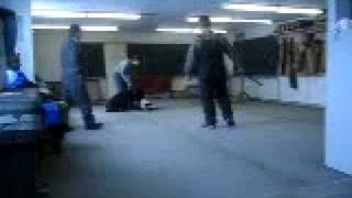 Bullet Giant Schnauzer Schutzhund Training