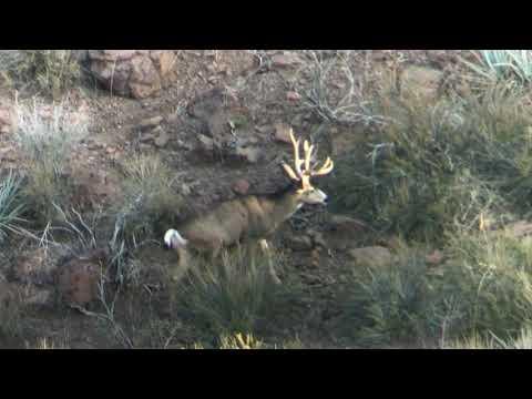 Nevada Mule Deer Hunt 2018