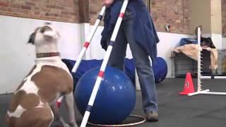 Treibball Skills - Chicago Dog Training
