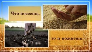 Проповедь  «Что посеешь, то и пожнёшь» — Андрей П. Чумакин