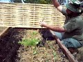 growing and sowing fennel