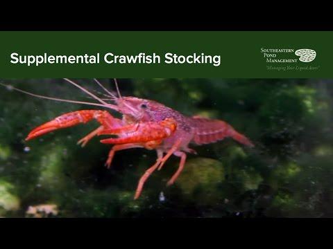 Stocking Crawfish