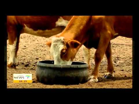 NW farmers resort to feeding livestock with chicken manure