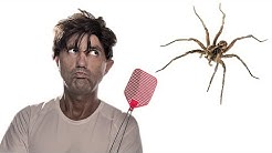 This Is Why You Should NEVER Kill a Spider