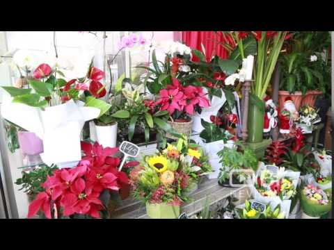 Alberts Flowers A Florist Or Flower Shop In Brisbane Offering Flower Arrangement Or Flower Delivery
