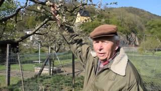 Helmut Krüger spricht über Frostschäden bei der Apfelblüte