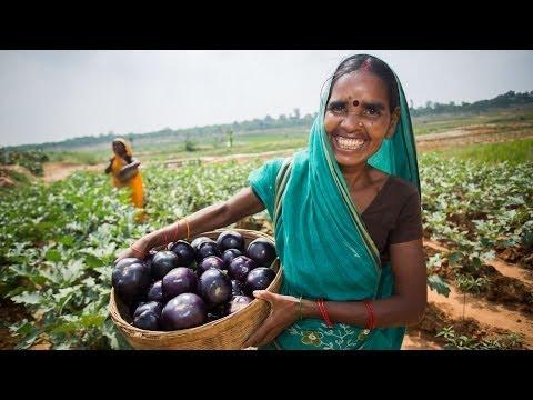 Lasting Vegetables in India: Meet Mina