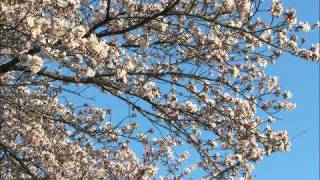 初田悦子 - 春ある国に生まれ来て
