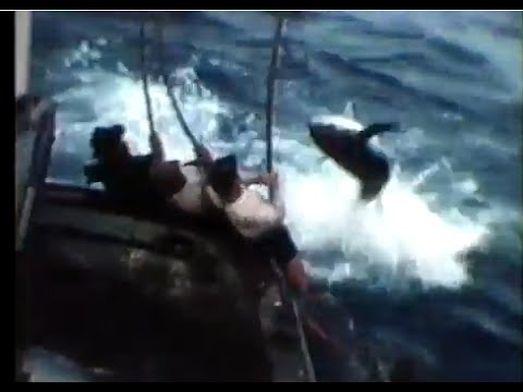 San diego tuna jack pole fishing mermaid boat tuna for Fishing license san diego