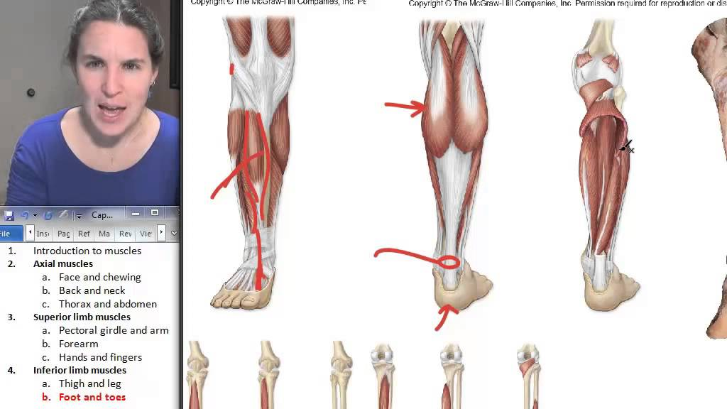 Foot + Toe Muscles ☆ Human Anatomy Course - YouTube
