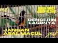 Jangan Asal Macul Lagunya Dengerin Murai Borneo Pelita Piala Jateng   Mp3 - Mp4 Download