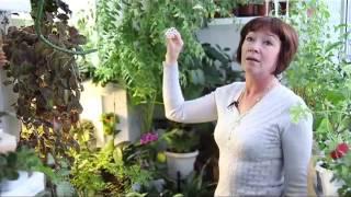 видео Зимний сад в квартире своими руками: фото дизайна