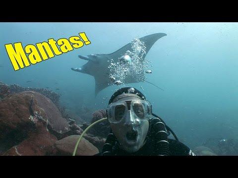 Yap Manta Rays (HD) | JONATHAN BIRD'S BLUE WORLD