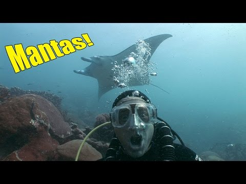 Yap Manta Rays (HD) | JONATHAN BIRD'S BLUE WORLD