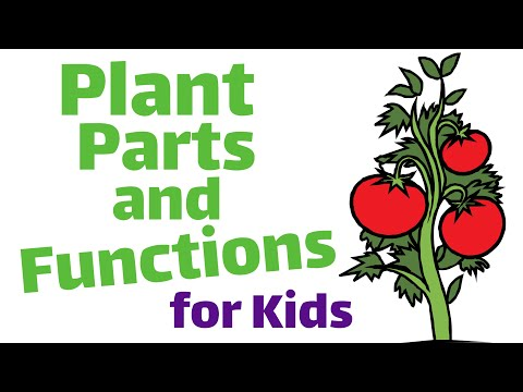 Plant Parts and Functions First and Second Grade Science Lesson