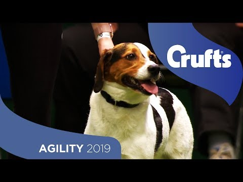 Agility - Crufts Large Novice And Medium ABC Final - Jumping - Part 1 | Crufts 2019