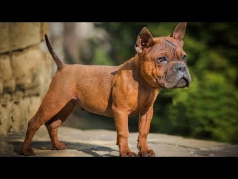 The 10 Most Ancient Dog Breeds