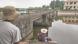 Câu Cá Giải Trí Câu Được Toàn Cá Nhưng Khủng (Fishing) | Câu Cá Vui