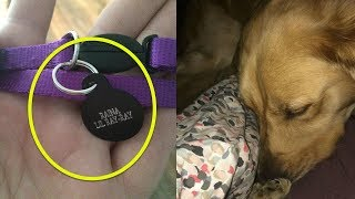 When A Man Came Home From Work, His Grieving Dog Immediately Alerted Him To A Hidden Intruder
