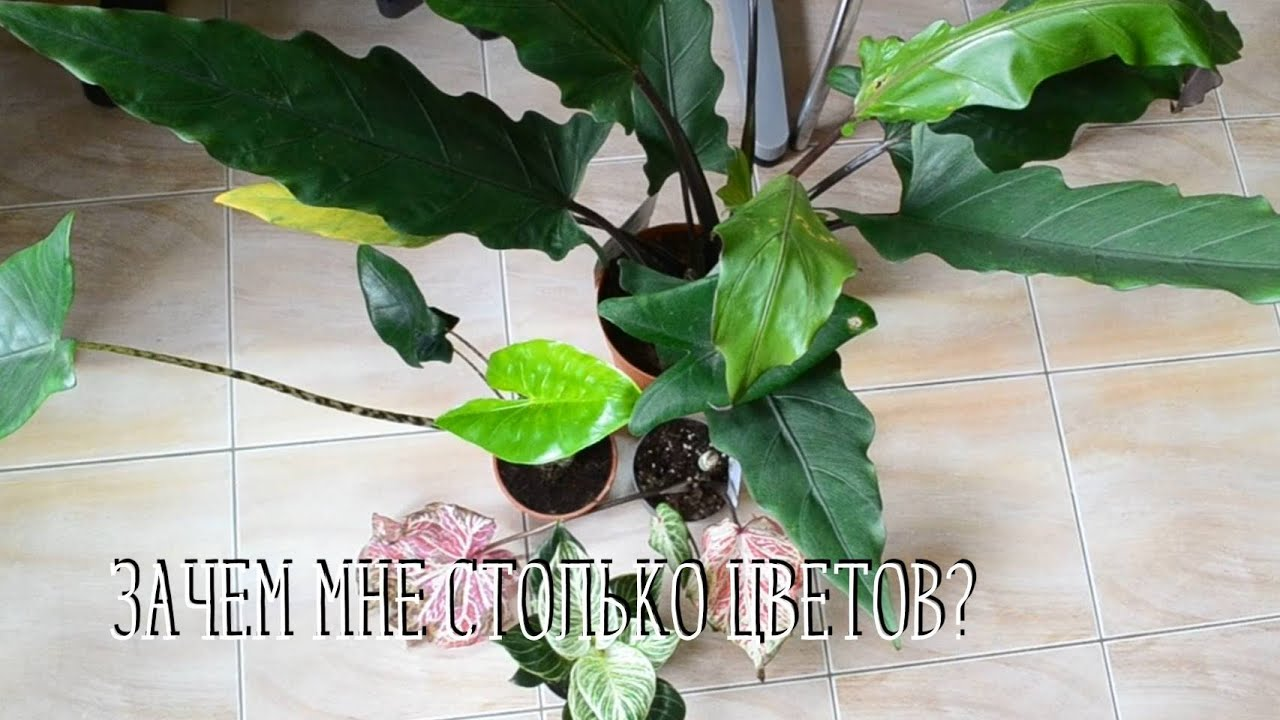 Супер новинки комнатных цветов. Зачем мне столько растений?