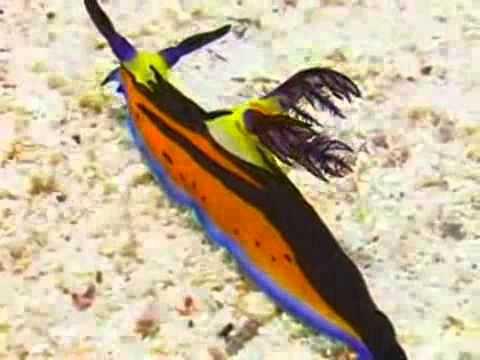 MeChoiGame.com - Sinh vật kỳ lạ dưới biển