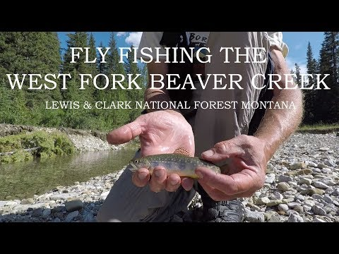 Fly Fishing West Fork Beaver Creek Lewis & Clark National Forest Montana