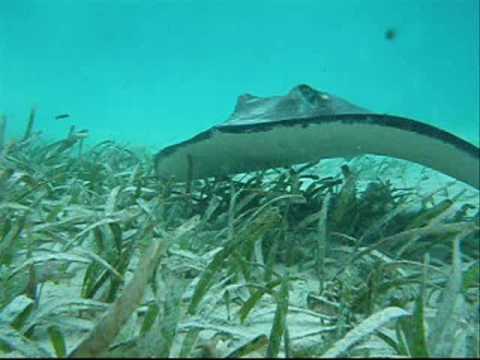 STLCC Meramec Field Experience in Marine Biology