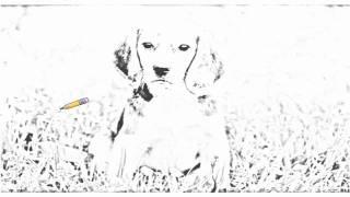 Auto Draw 2: Beagle Love