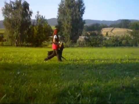 Dobermann obedience training