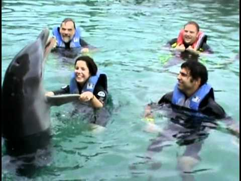Swimming with Dolphins in Nassau