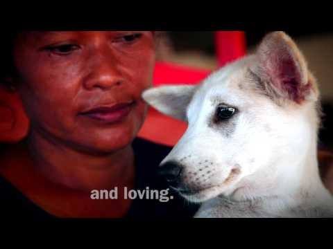 Help Us Stop the Bali Dog Slaughter, Take Action Now!