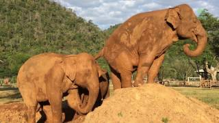 Elephant Faamai Fart to Kabu