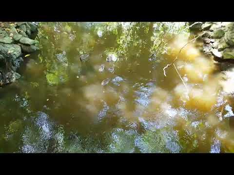 Paradisus Punta cana обзор. заповедник / Paradisus Punta cana review. The Magyar park
