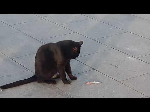 Kedi Balıkla Böyle Oynadı