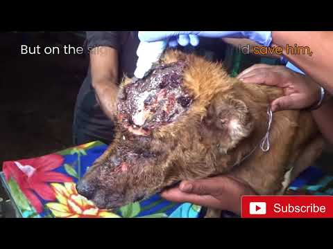 Download Alfie proves that nothing's impossible--amazing rescue and recovery. (Graphic footage)