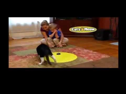 Cats Meow Toy | As Seen on TV Cats Meow Toy your Cats will love it