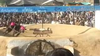 thal akhara 13-1-13