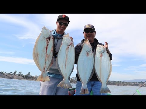 California Halibut Fishing With Live Bait