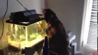Рыба коту наваляла!!! Прикол!