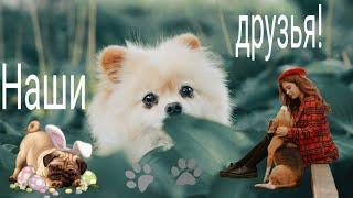 А какая собака у тебя?What animal do you have?