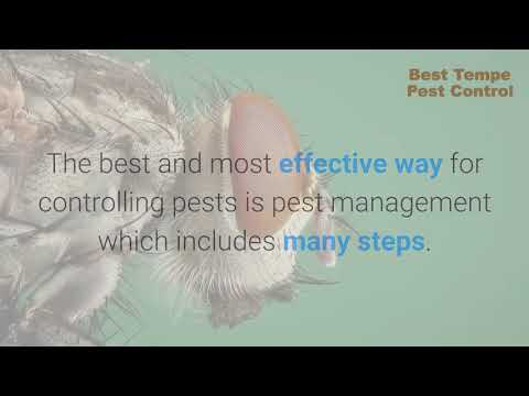 Tempe Pest Control Service | Best Exterminator in Arizona