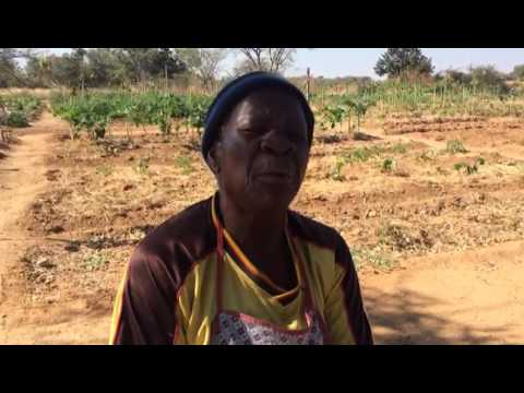 Izakhamizi Zikhala Ngokuswelakala Kwamanzi Okulima