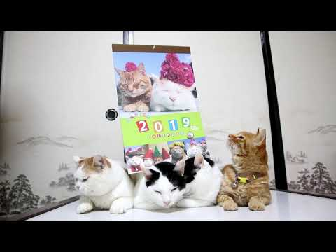 かご猫 カレンダー 2019