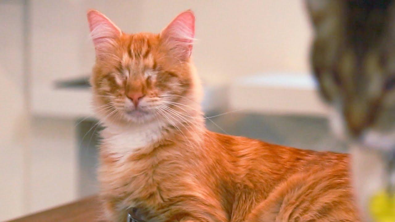 Homer Blind Cat Youtube