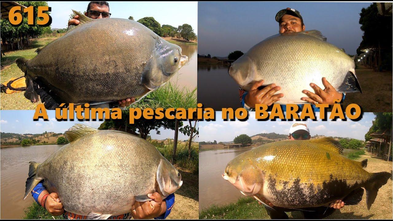 A última pescaria com os Tambas Gigantes no Clube de Pesca Baratão - Fishingtur 615 Pesca e Pescaria